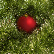Red ball with green fir — Stock Photo