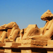 Ram headed Sphinxes, Karnak, Luxor - Stock Photo