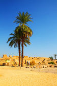 Palm trees in Egypt, Luxor — Stock Photo