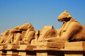 Ram headed Sphinxes, Karnak, Luxor — Stock Photo