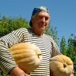 Stockfoto: Senior gardener with pumpkins
