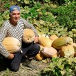 Senior gardener with pumpkins — Stock Photo