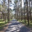 Road in the woods, summer - Stock Photo