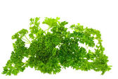Parsley, isolated — Stock Photo