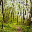 Trail in the spring forest - Stock Photo