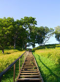 Ladder to the hill, summer — Stock Photo