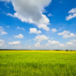 summer landscape&quot — Stock Photo