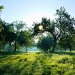 Summer forest, sun — Stock Photo