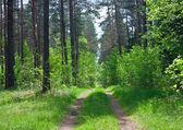 在树林里路 — 图库照片