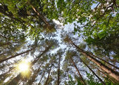 Summer forest, view from below — Stock Photo
