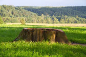 Stump in the grass — Stock Photo