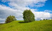 Summer landscape — Zdjęcie stockowe