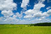 Paisagem rural com vacas — Foto Stock