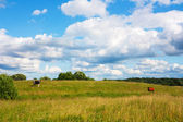 Cows in the meadow, summer landscape — Stock Photo