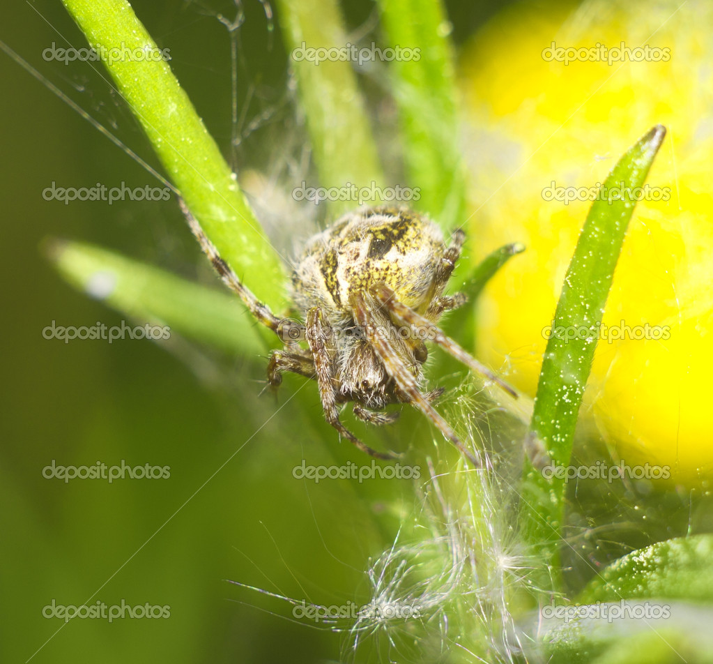 Spider — Stock Photo #4916969