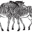 2 zebras — Stock Vector
