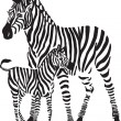 Zebras — Stock Vector