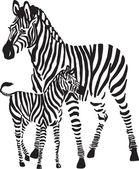 Zebras — Stock Vector