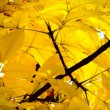 Autumn leaves. Trees. Texture. - Stock Photo