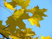 Herbstlaub. herbst. — Stockfoto