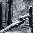 Winter forest. Snow. - Stock Photo