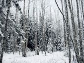 Winter forest. Snow. — Stock Photo