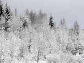 Bosque de invierno. nieve. — Foto de Stock
