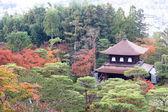 Japanese temple in autumn garden — Stock Photo