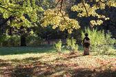 Uma senhora japonesa em uma floresta de outono — Fotografia Stock