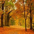 Valley in autumn park - 