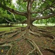 Stock Photo: Tree roots