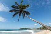 Idyllic beach with palm. Sri Lanka — Stock Photo