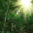 Sunlight in tropical jungle forest - Stockfoto
