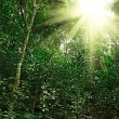 Stock Photo: Sunlight in tropical jungle forest