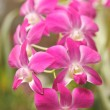 Royalty-Free Stock Photo: Pink orchid
