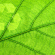 Recycling symbol on leaf - Photo