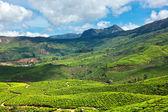 Teeplantagen — Stockfoto