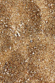 Beach sand of grinded sea shells — Stock Photo