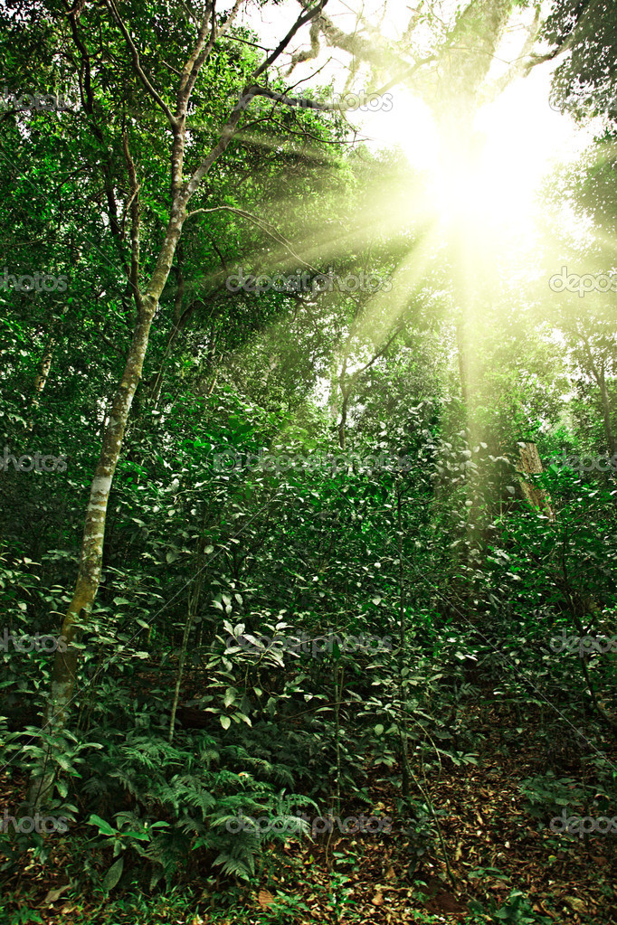 Sunlight in tropical jungle forest - Stock ImageTropical Rainforest Sunlight