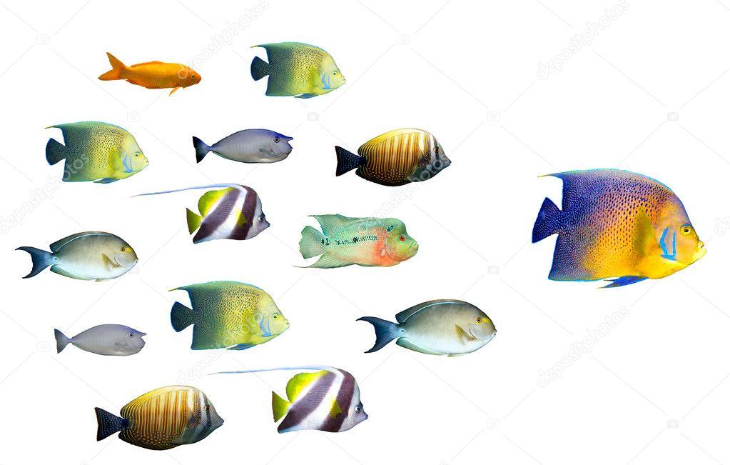 Leadership concept big fish leading school of tropical for Big fish script