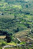 Terraced fields — Stock Photo