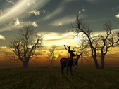Deer sunset — Stock Photo