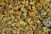 Vody zvlnění textura — Stock fotografie