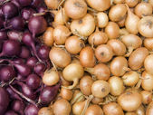 Red and white onions — Stock Photo