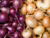 Red and white onions background — Stock Photo