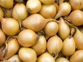 Small onions background — Stock Photo
