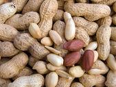 The cleared peanut macro — Stock Photo