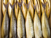 Cold smoking a mackerel — Stock Photo