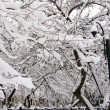 Snow on branches of trees2 — Stock Photo