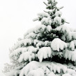Snow-covered fur-tree — Stock Photo